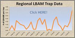 Regional LBAM Trap Data